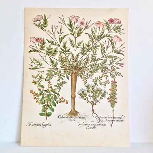Planches Botanique Brocanteandco Boutique En Ligne De