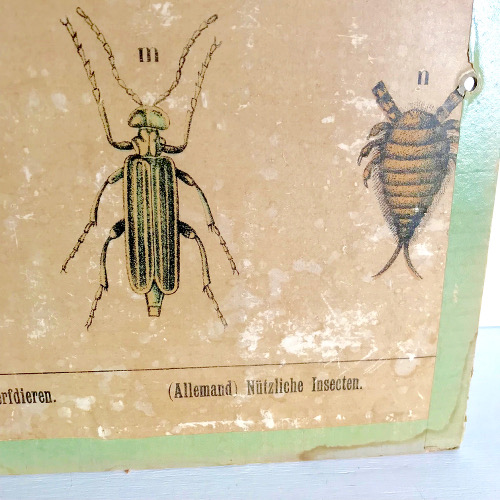 Illustrations insectes