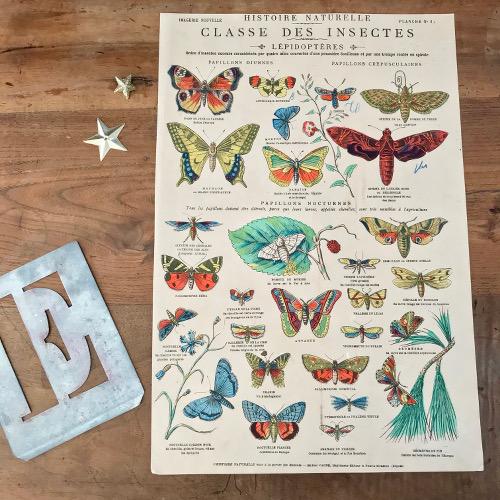 Illustration Classe des insectes