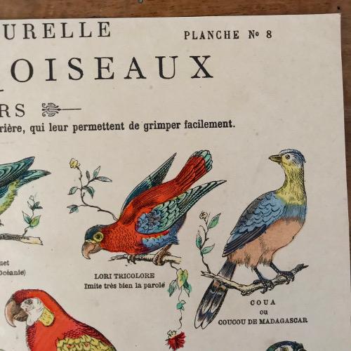 Illustration classe des oiseaux