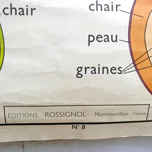 Affiche scolaire Rossignol 7 les feuilles 8 les fruits