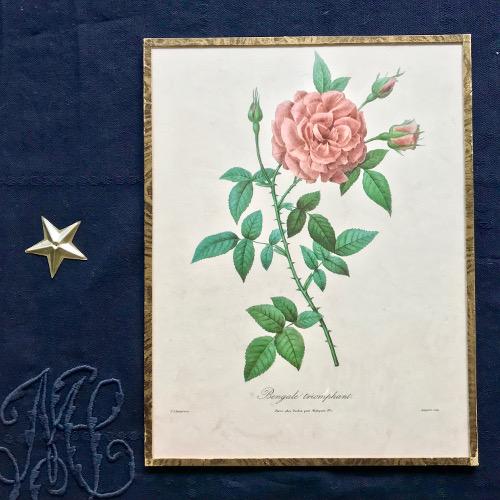 Illustrations botaniques