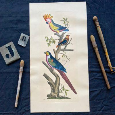 Illustration d'oiseaux colorisée