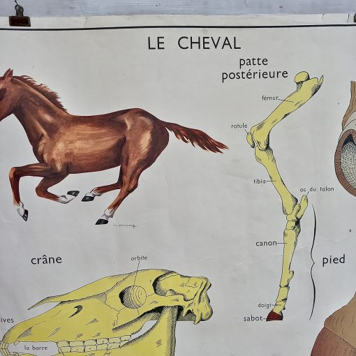 Affiche Rossignol Le lapin Le cheval