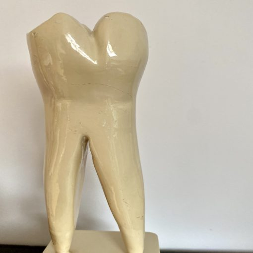 Dent en faïence
